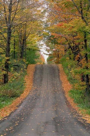 Autumn Woods Road Picture